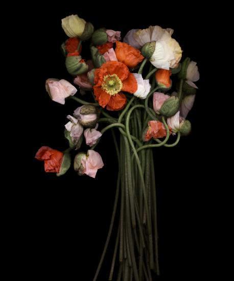Цветочные портреты в проекте Джойс Теннесон (Joyce Tenneson) 24