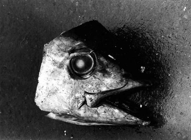 Дайдо Морияма (Daido Moriyama) – известный японский фотограф 14