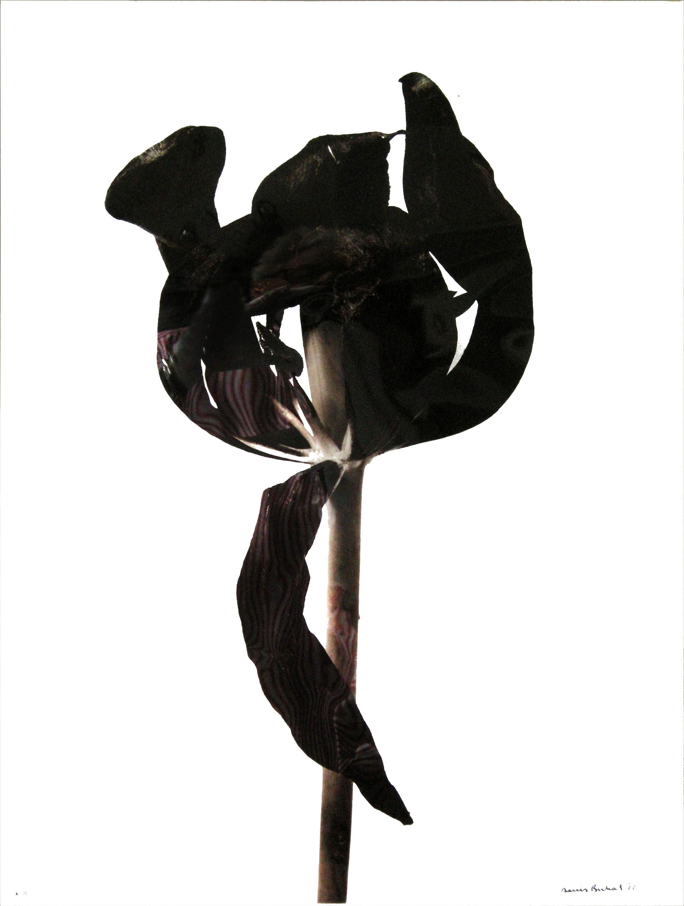 Денис Брихат (Denis Brihat) – французский фотограф 11