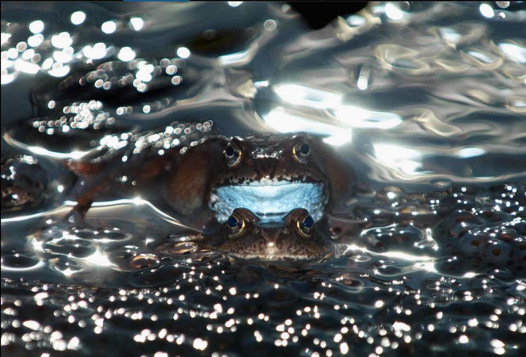Победители фотоконкурса Wildlife Photographer of the Year 2014 12