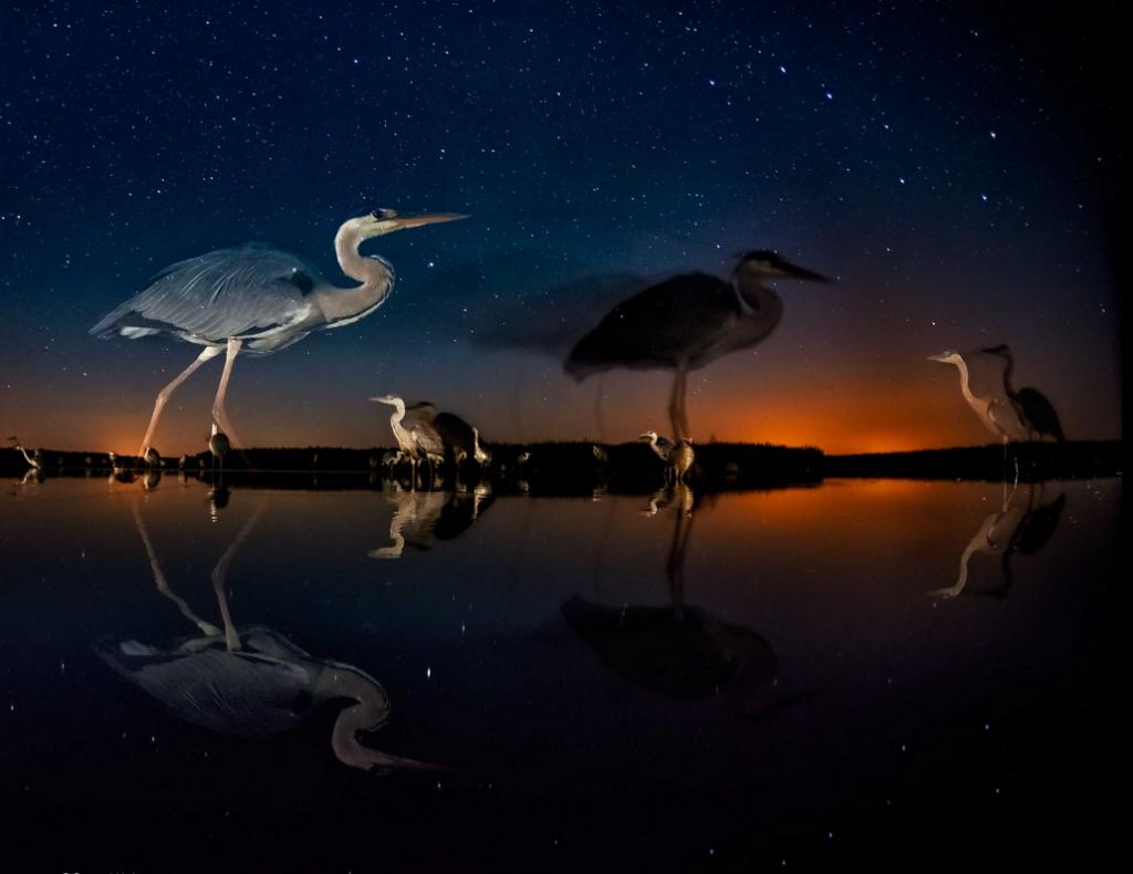 Победители фотоконкурса Wildlife Photographer of the Year 2014 5