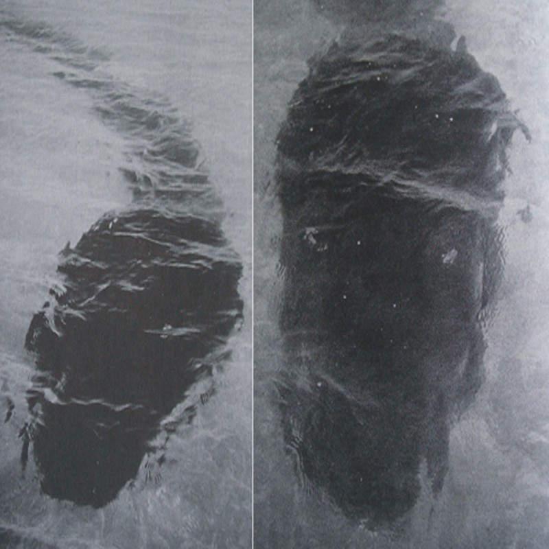 Тайна морского чудовища