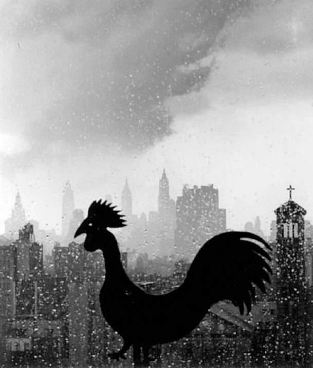Величайший график фотографии Андре Кертеc(Andre Kertesz) 9