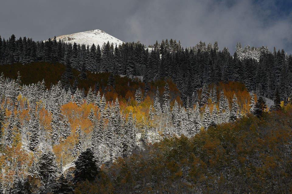Nikon D750 для съемки дикой природы и пейзажей. Примеры фото