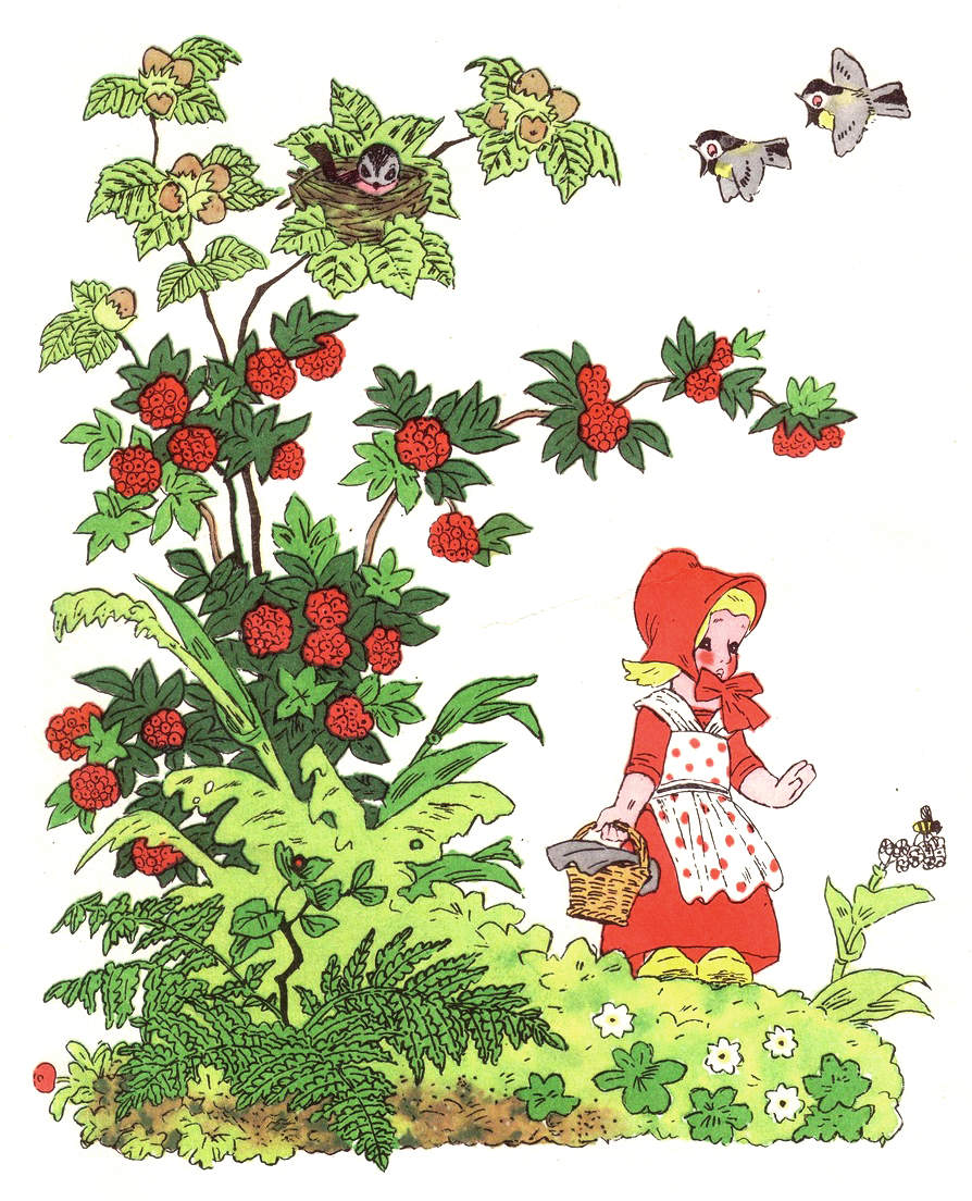 иллюстрация Красная шапочка 6