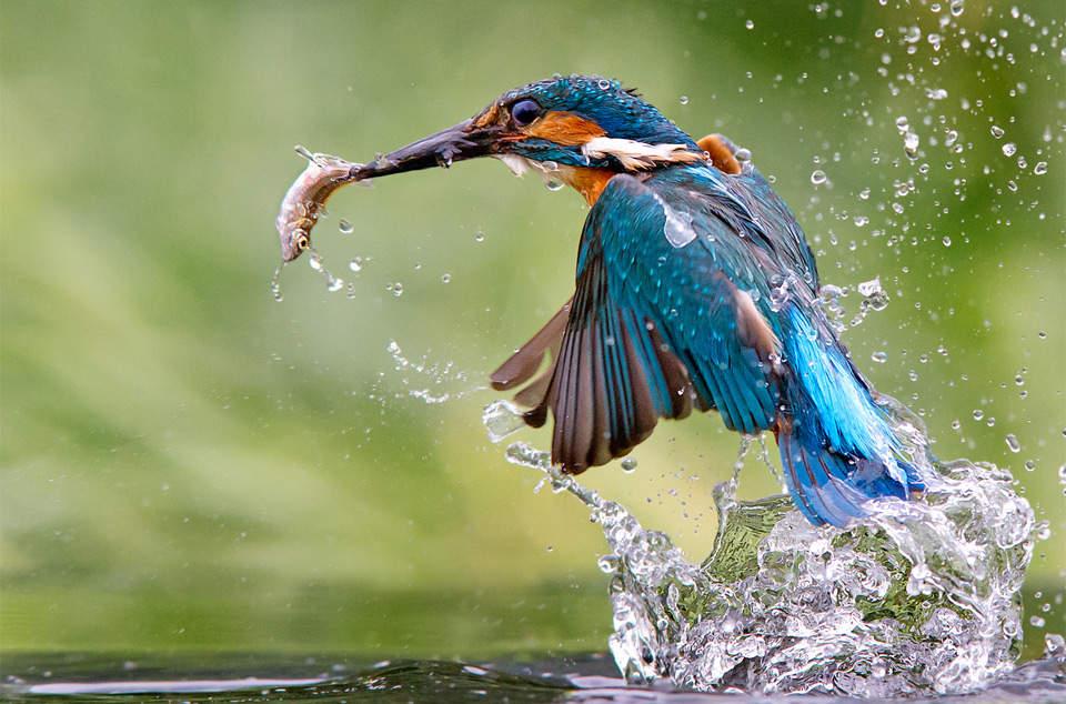 Как фотографировать птиц в дикой природе