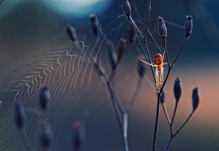 Победители фотоконкурса Красный паук