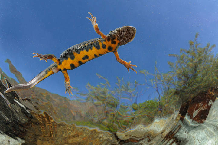 Победители фотоконкурса Society of Biology's 2014 Photography Competition