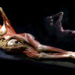 Гюнтер фон Хагенс (Gunther von Hagens) и его невероятные анатомические работы