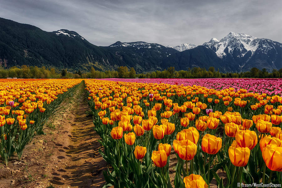 Фото: West Coast Scapes