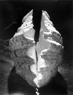 Вечное тело Рут Бернхард (Ruth Bernhard) 11