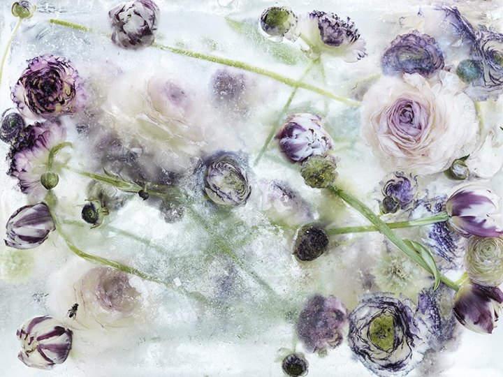 цветы во льду 2