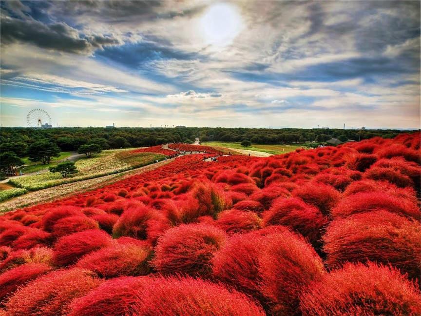 10 самых фантастических мест на Земле Hitachi Seaside Park - Hitachinaka, Япония