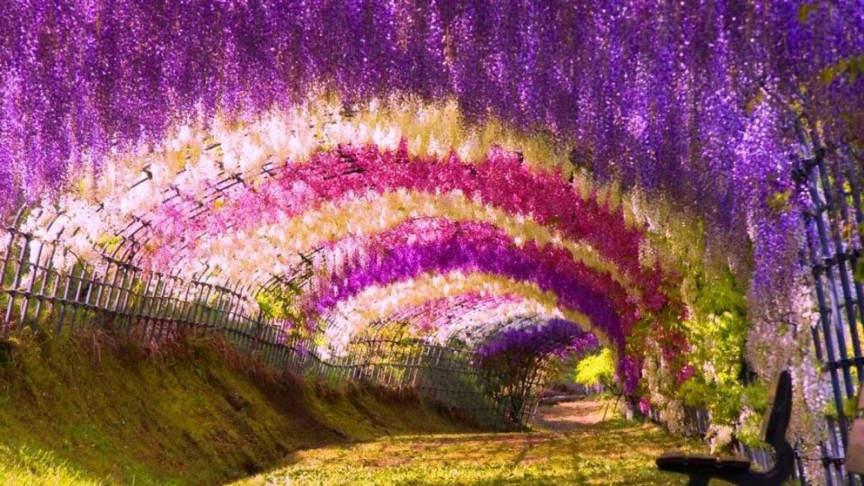 10 самых фантастических мест на Земле Туннель из цветов глицинии - Китакюсю, Япония