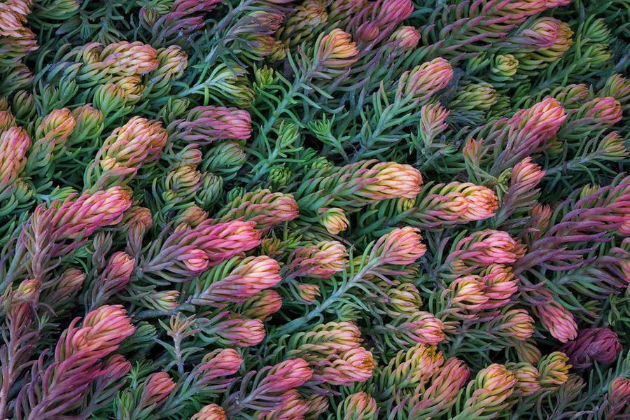 Фотографируем растения Советы по съемке 2