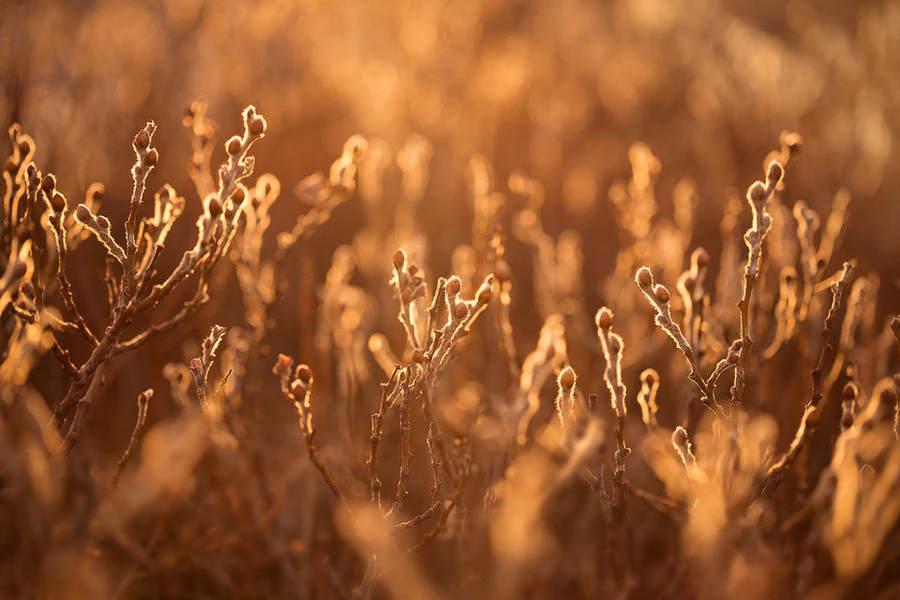 Фотографируем растения Советы по съемке 5