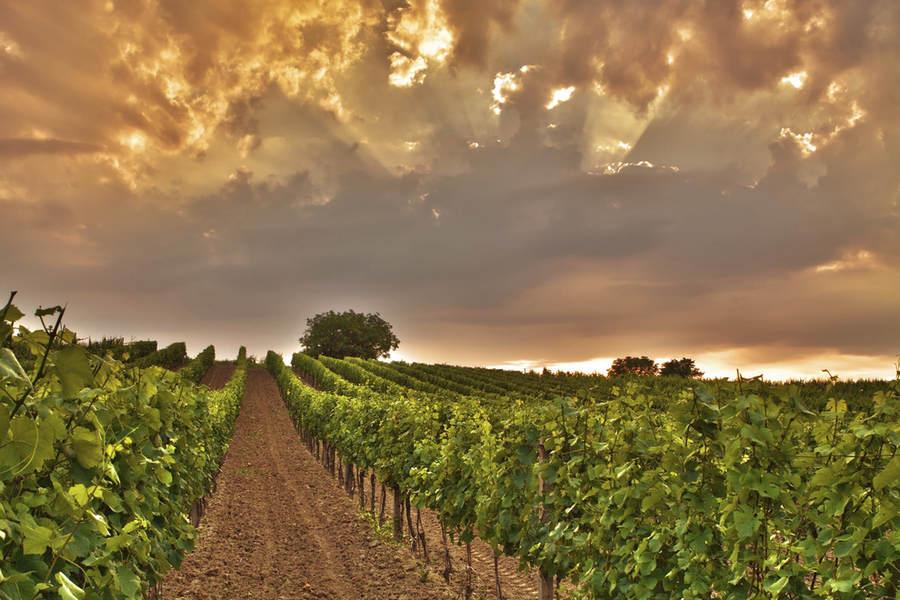 Чехия красива и за пределами столицы, множество виноградников, расположенных на просторах Чехии, придают ей свой особый колорит.