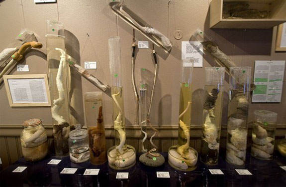Топ-10 необычных музеев мира