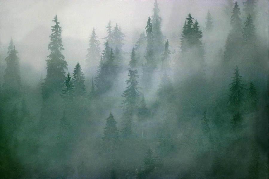 Франк Хорват (Frank Horvat) и «Портреты деревьев» 0