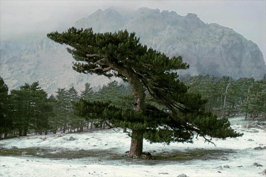 Франк Хорват (Frank Horvat) и «Портреты деревьев» 10
