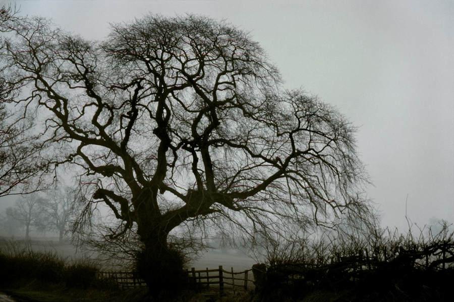 Франк Хорват (Frank Horvat) и «Портреты деревьев» 13