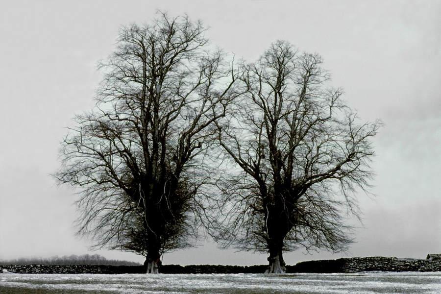 Франк Хорват (Frank Horvat) и «Портреты деревьев» 14