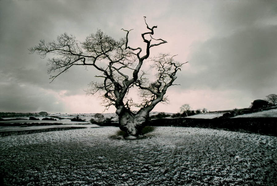 Франк Хорват (Frank Horvat) и «Портреты деревьев» 15