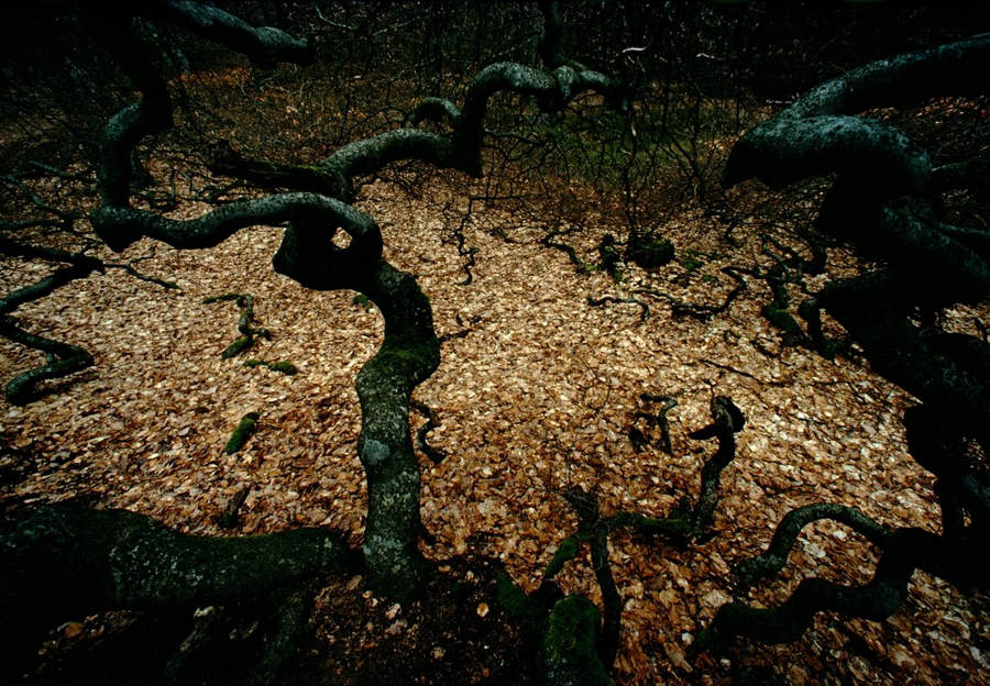 Франк Хорват (Frank Horvat) и «Портреты деревьев» 16