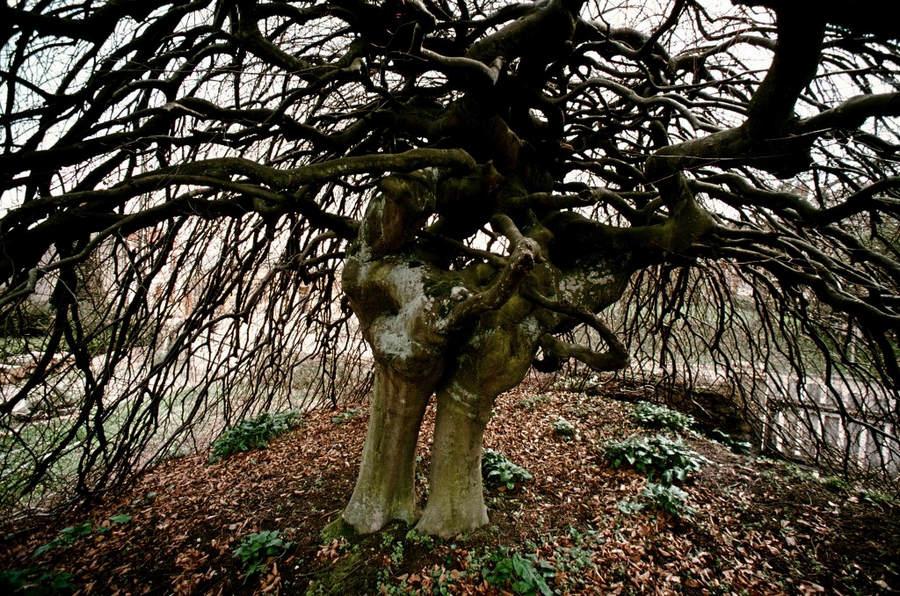 Франк Хорват (Frank Horvat) и «Портреты деревьев» 17