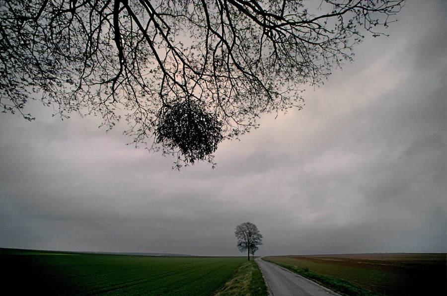 Франк Хорват (Frank Horvat) и «Портреты деревьев» 18