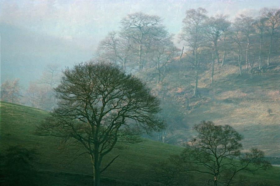 Франк Хорват (Frank Horvat) и «Портреты деревьев» 19