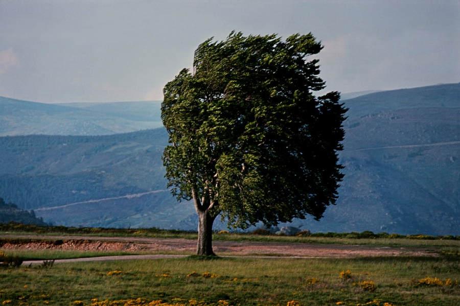 Франк Хорват (Frank Horvat) и «Портреты деревьев» 2