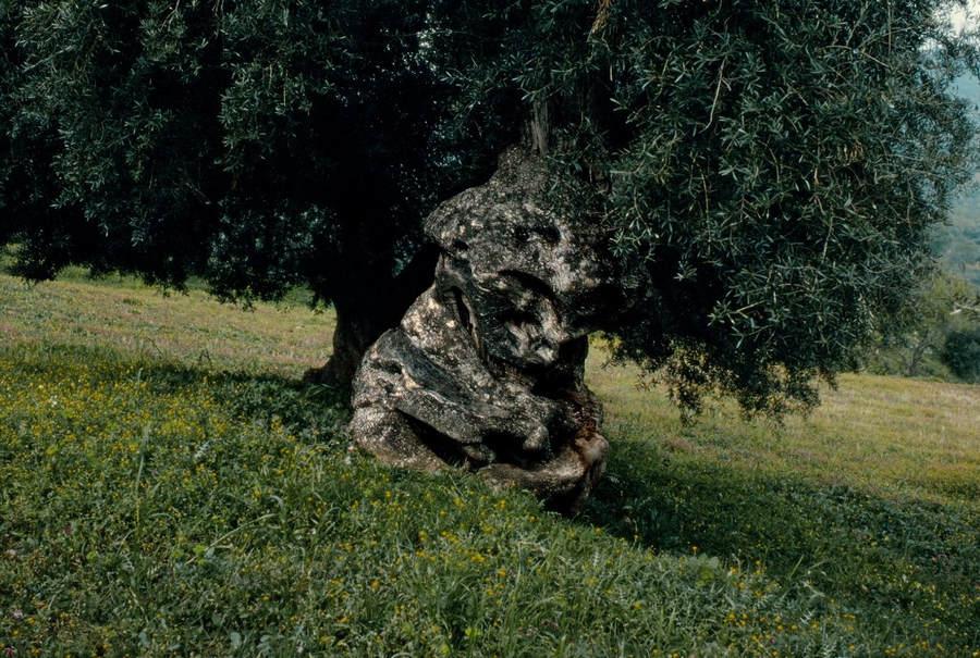 Франк Хорват (Frank Horvat) и «Портреты деревьев» 20