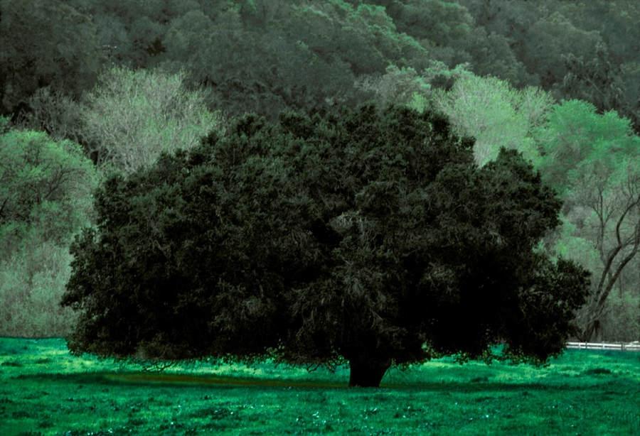 Франк Хорват (Frank Horvat) и «Портреты деревьев» 21