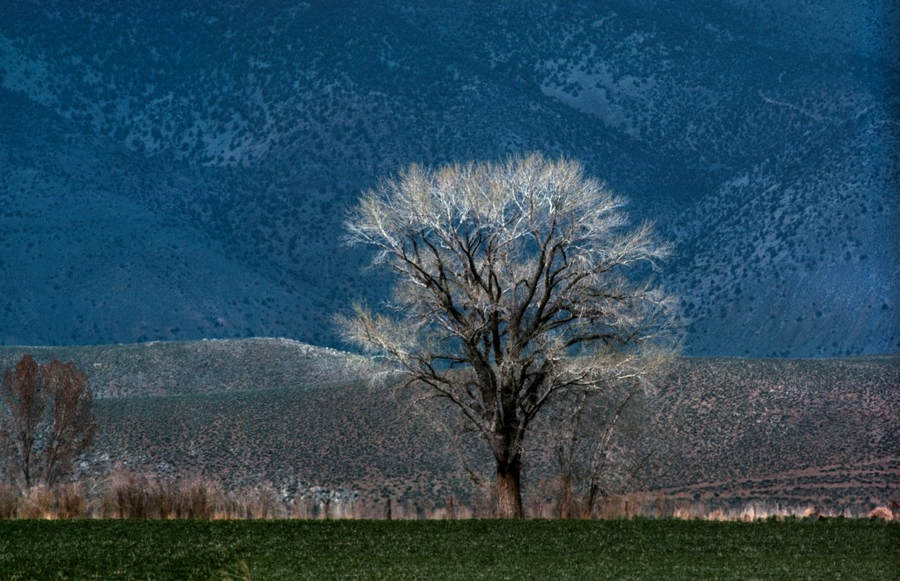 Франк Хорват (Frank Horvat) и «Портреты деревьев» 22