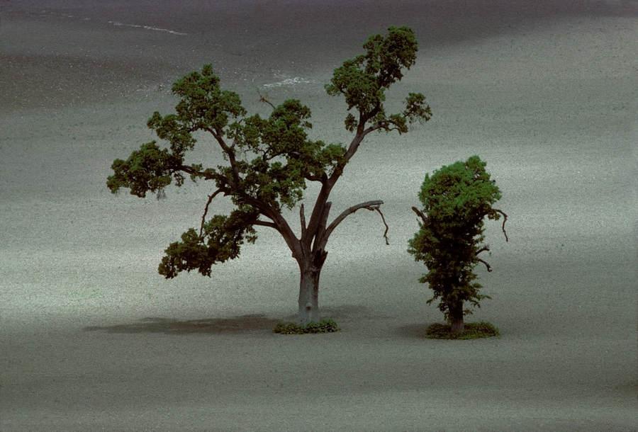 Франк Хорват (Frank Horvat) и «Портреты деревьев» 23