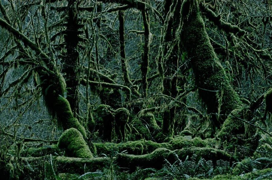 Франк Хорват (Frank Horvat) и «Портреты деревьев» 24
