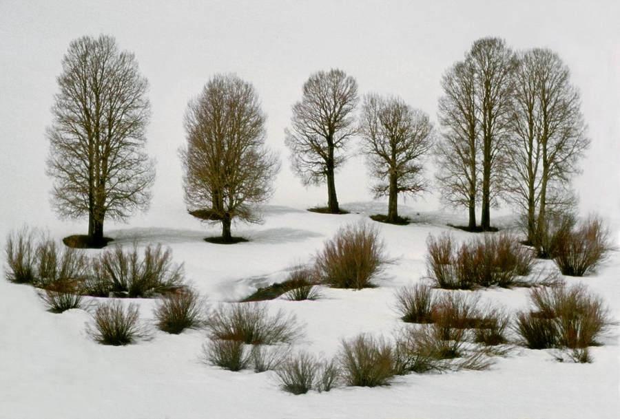 Франк Хорват (Frank Horvat) и «Портреты деревьев» 26