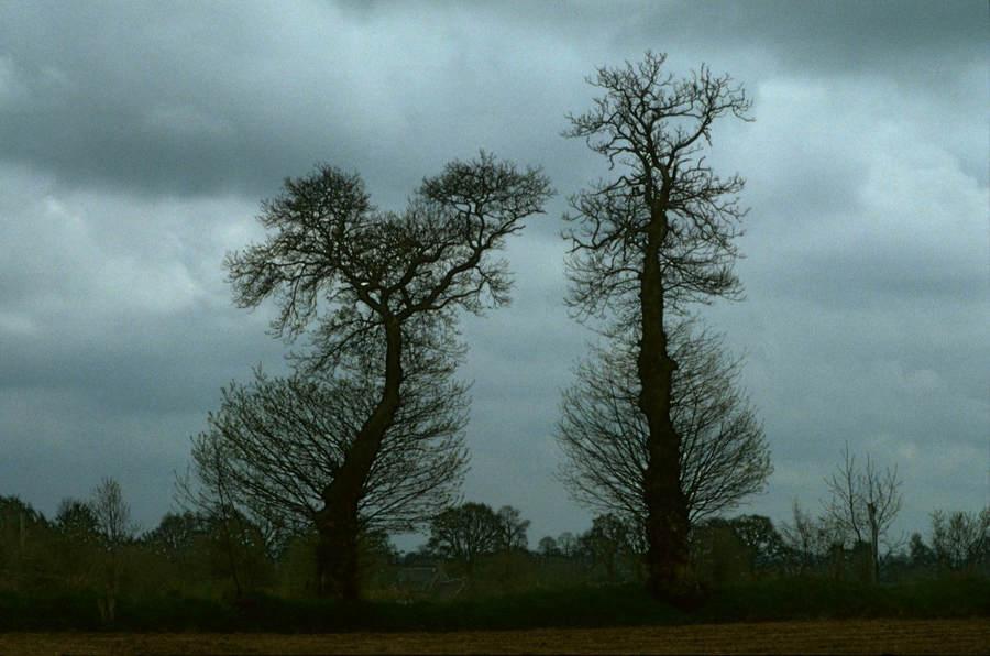 Франк Хорват (Frank Horvat) и «Портреты деревьев» 27