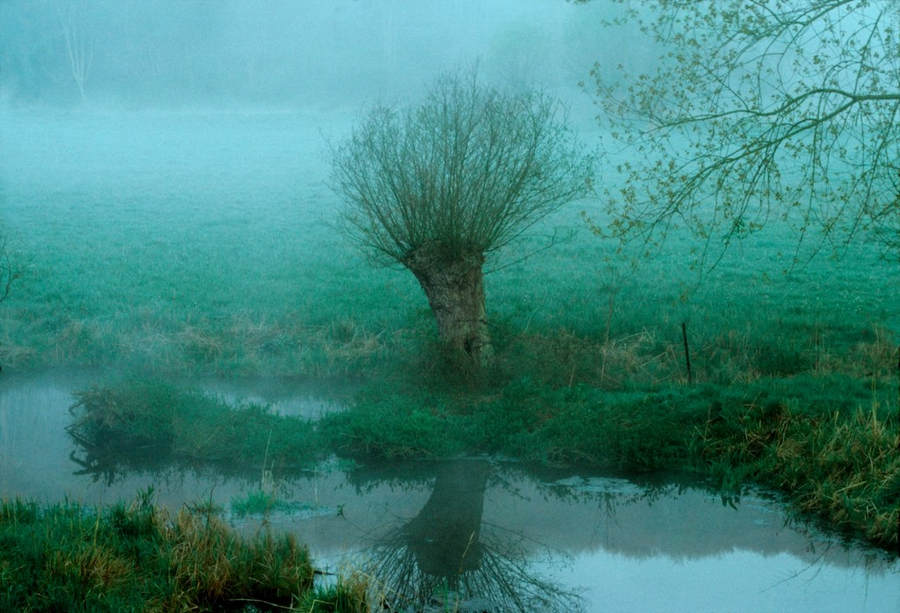 Франк Хорват (Frank Horvat) и «Портреты деревьев» 28