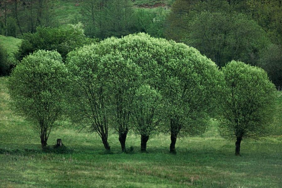 Франк Хорват (Frank Horvat) и «Портреты деревьев» 4