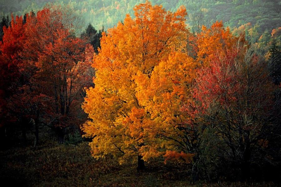 Франк Хорват (Frank Horvat) и «Портреты деревьев» 5