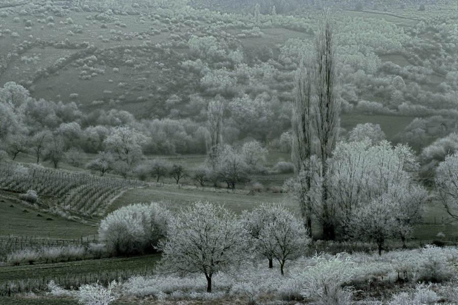 Франк Хорват (Frank Horvat) и «Портреты деревьев» 7