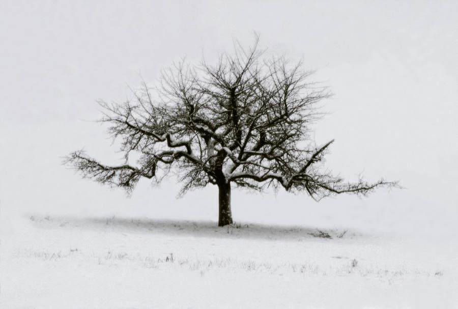 Франк Хорват (Frank Horvat) и «Портреты деревьев» 8
