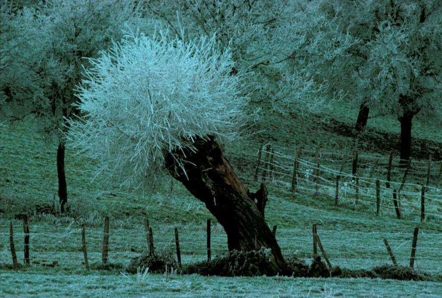 Франк Хорват (Frank Horvat) и «Портреты деревьев» 9