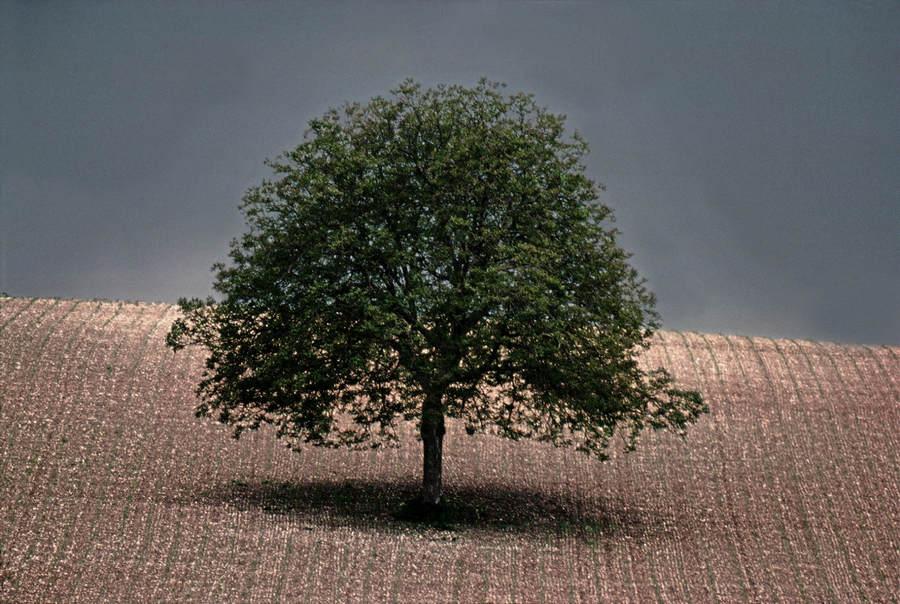 Франк Хорват (Frank Horvat) и «Портреты деревьев»