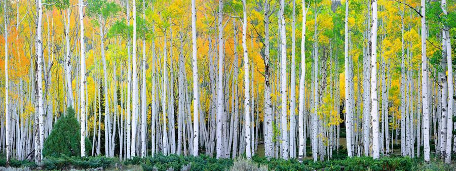 Ландшафтные фотографии Родни Логха (Rodney Lough Jr) 15