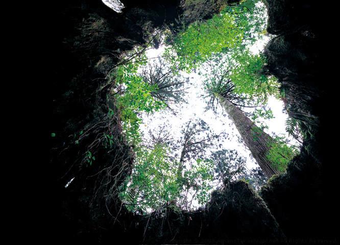 Нетронутая природа в работах Такаси Амано (Takashi Amano) 15