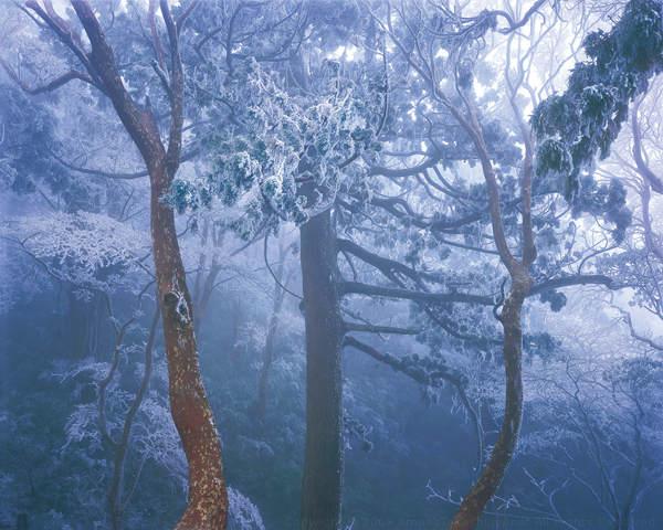 Нетронутая природа в работах Такаси Амано (Takashi Amano) 16