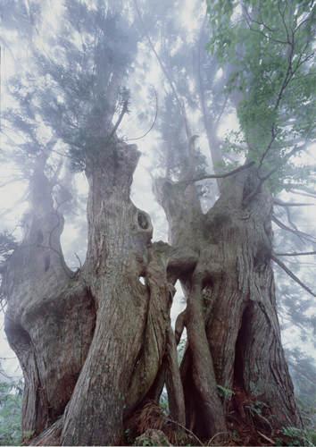Нетронутая природа в работах Такаси Амано (Takashi Amano) 18